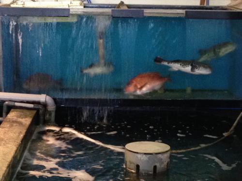 店内に生け簀がある笠岡の魚好人一休で寿司御膳を食べて来た
