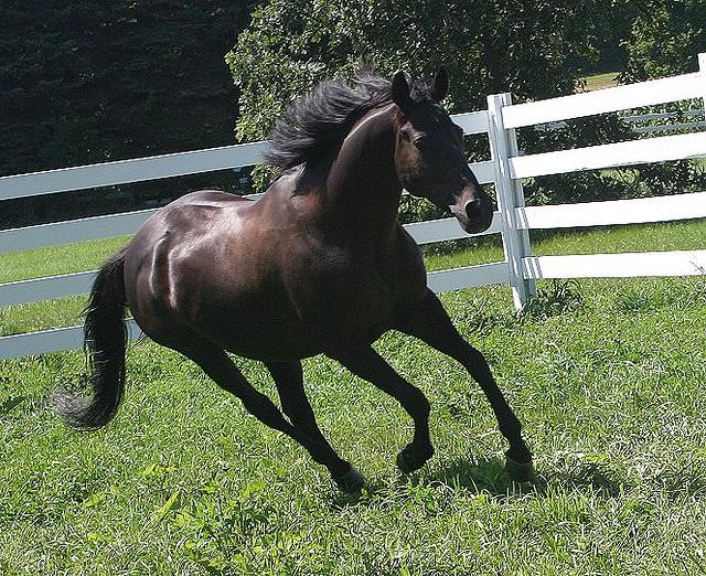 ダービーインパクト無課金でもSSランクの馬が誕生!